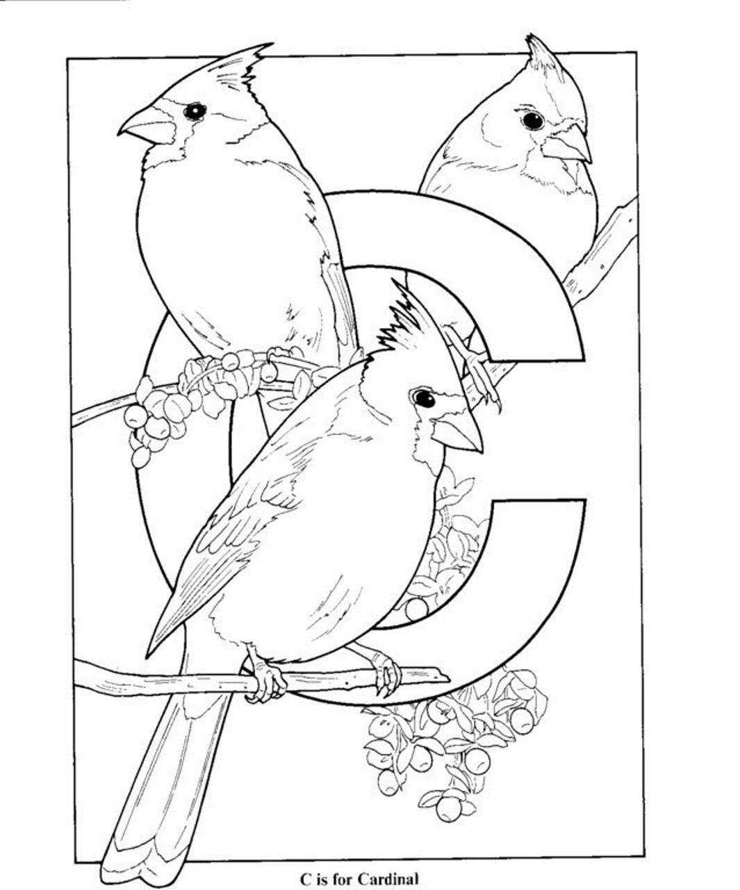 Az Coloring Pages Az Cardinals Coloring Pages At Getdrawings Free For Personal