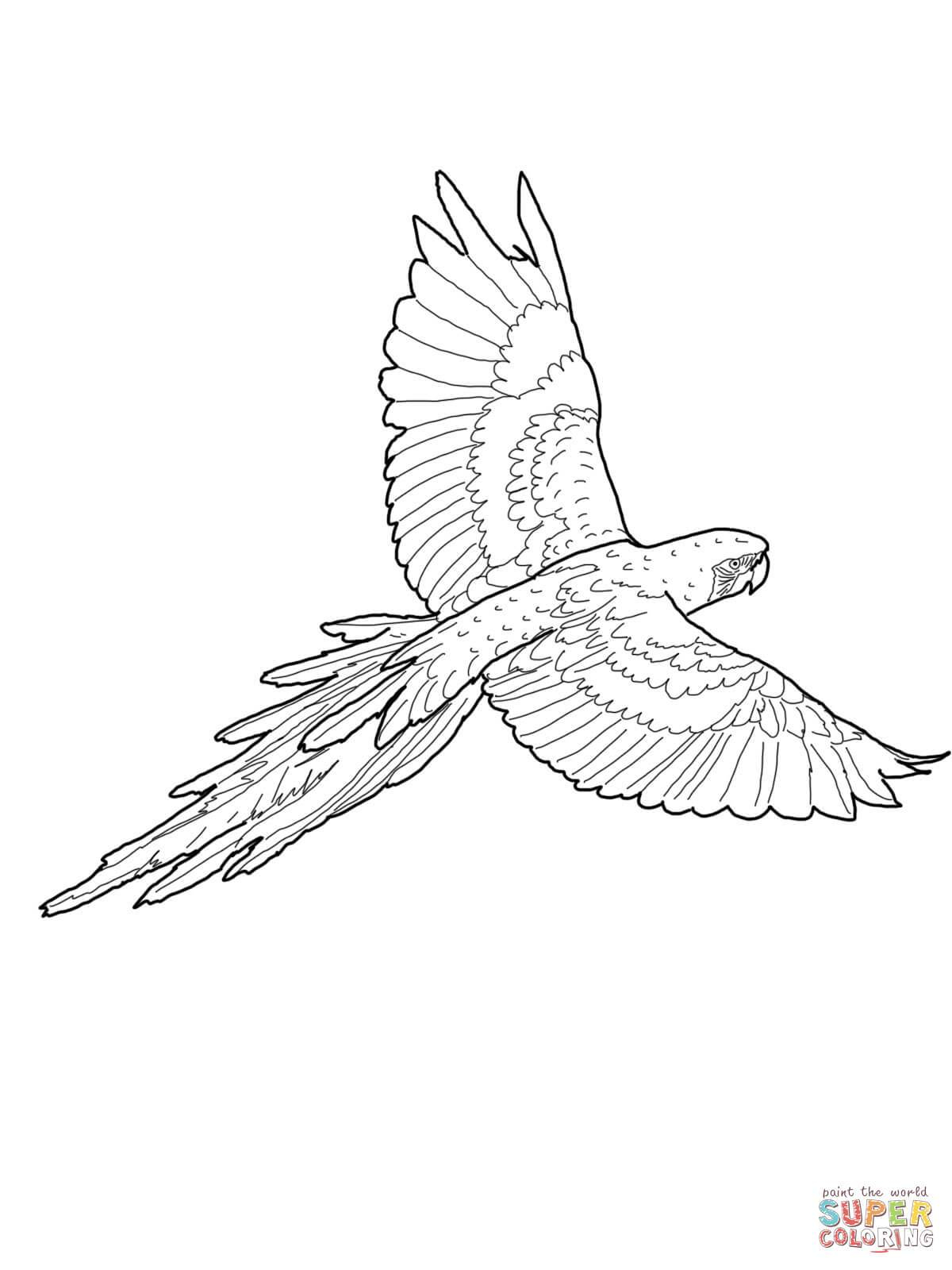 Az Coloring Pages Az Coloring Pages Free Coloring Pages Free Coloring Pages