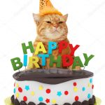 Birthday Cake Funny Funny Cat With Happy Birthday Cake Wearing A Party Hat Isolated On