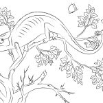 Chameleon Coloring Page Chameleon Coloring Pages Free Coloring Pages