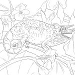 Chameleon Coloring Page Chameleon Coloring Pages Jacksons For Cameleon 1200900 Attachment