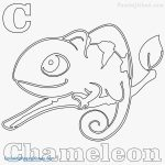 Chameleon Coloring Page Chameleon Coloring Pages Printable At Getdrawings Free For