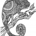 Chameleon Coloring Page Eric Carle Chameleon Coloring Page