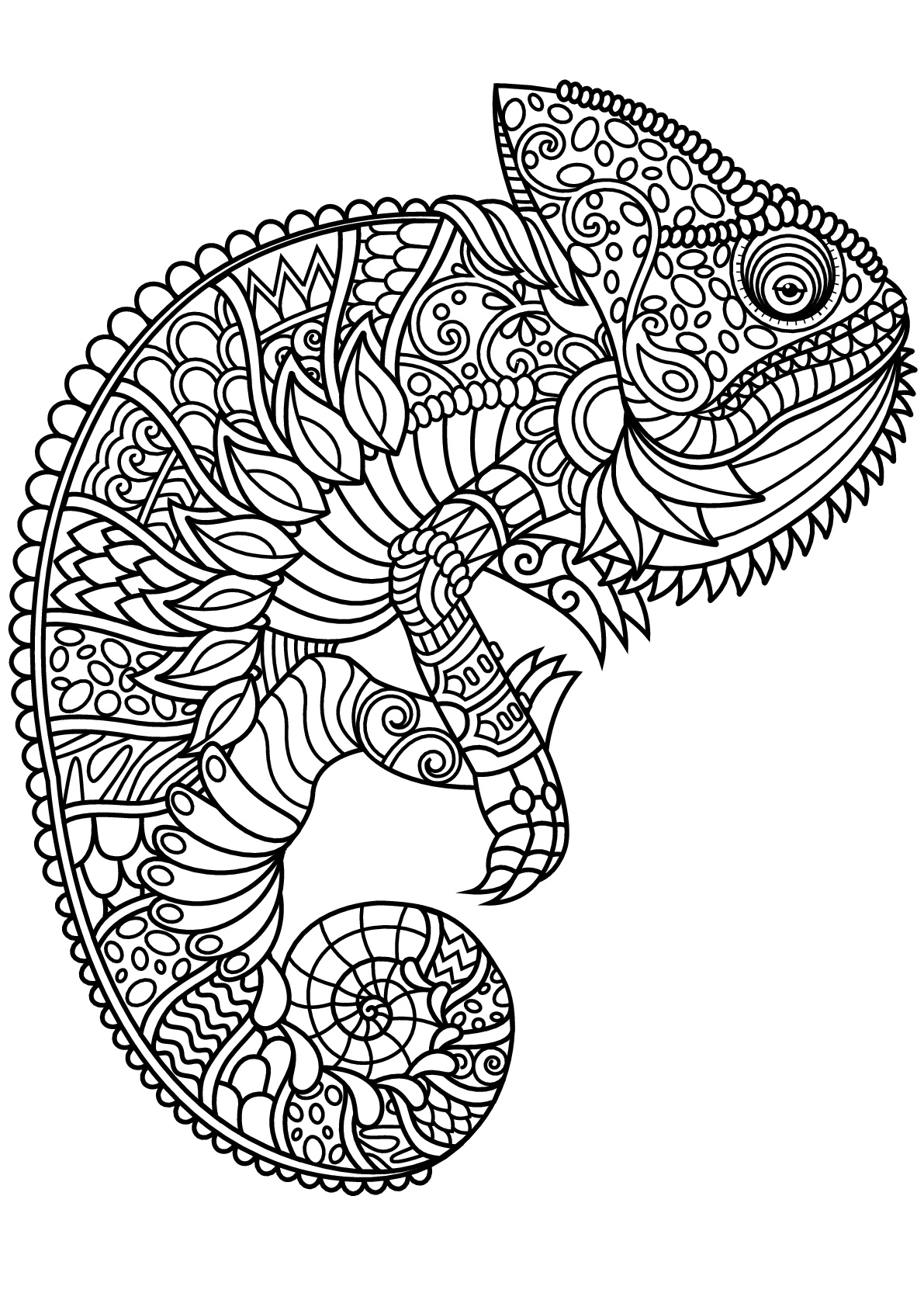 Chameleon Coloring Page Free Book Chameleon Chameleons Lizards Adult Coloring Pages