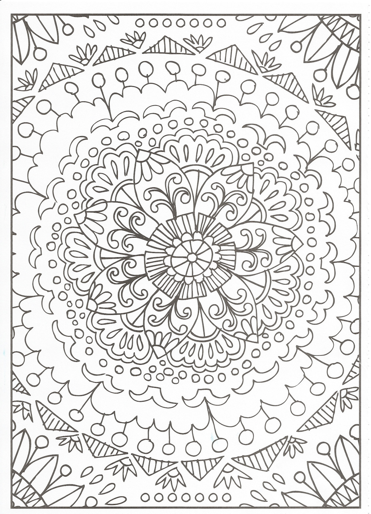 Chameleon Coloring Page Free Printable Dolphin Coloring Pages For Adults To Print Print Out