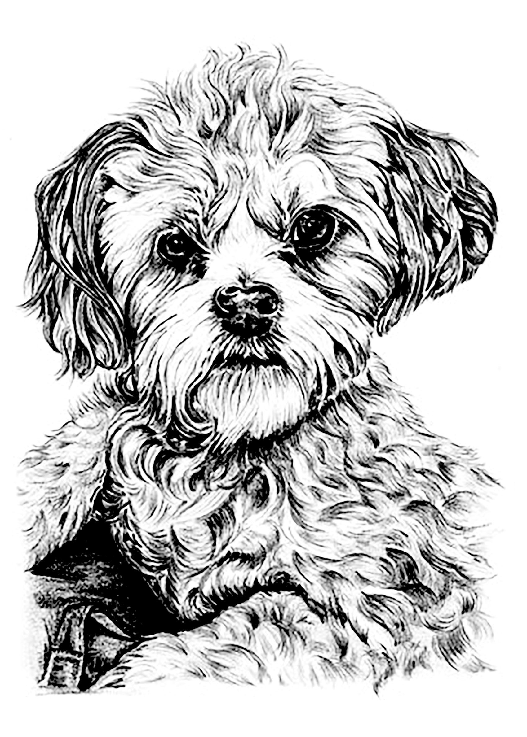 Dog Coloring Pages For Adults Dog Dogs Adult Coloring Pages