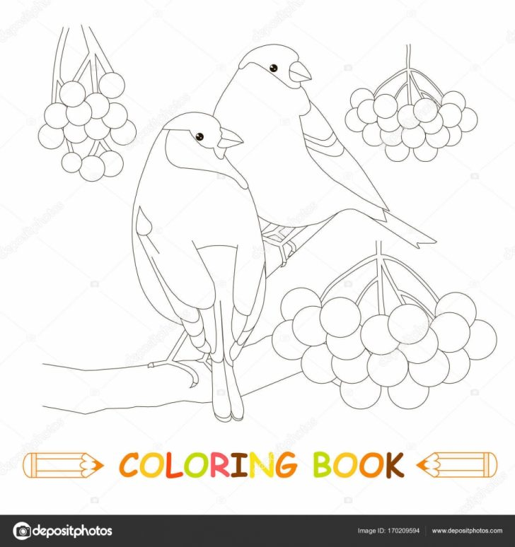 Grass Coloring Page Children Coloring Page Stock Vector Illustration Two Bullfinch