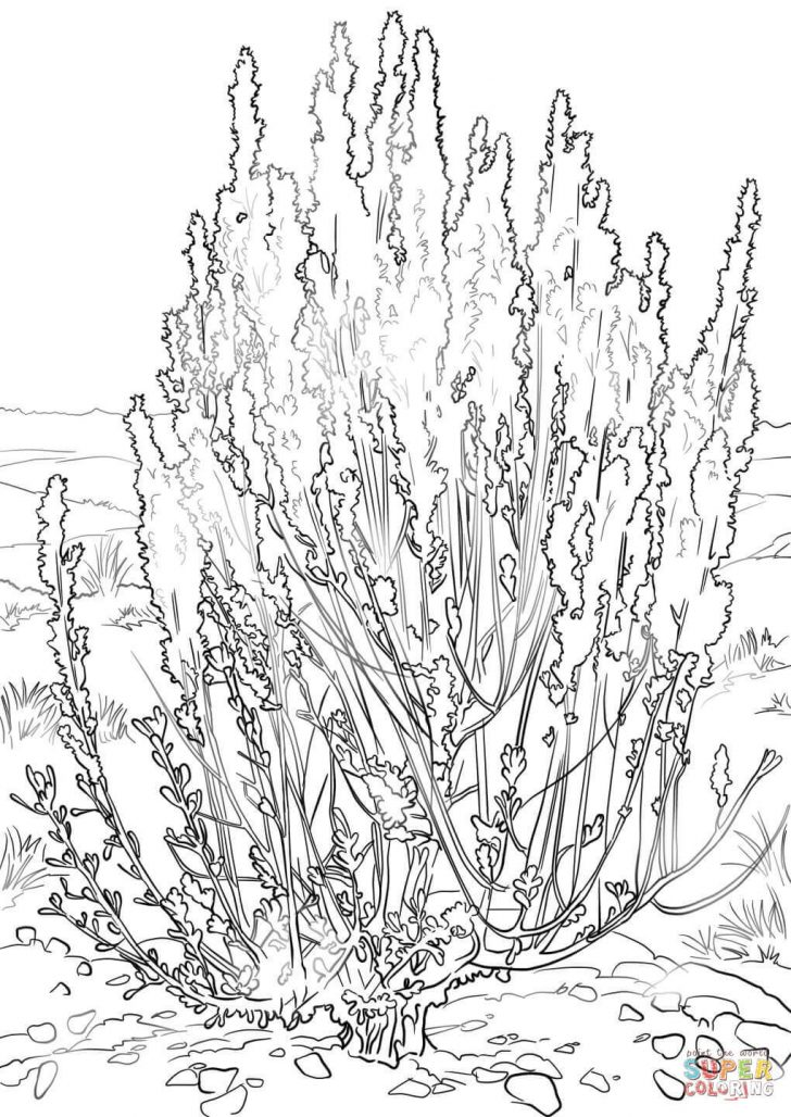 Grass Coloring Page Coloring Pages Of Trees And Grass Printable Coloring Pages For Kids