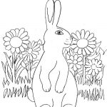 Grass Coloring Page Grass Coloring Page Smipvcu