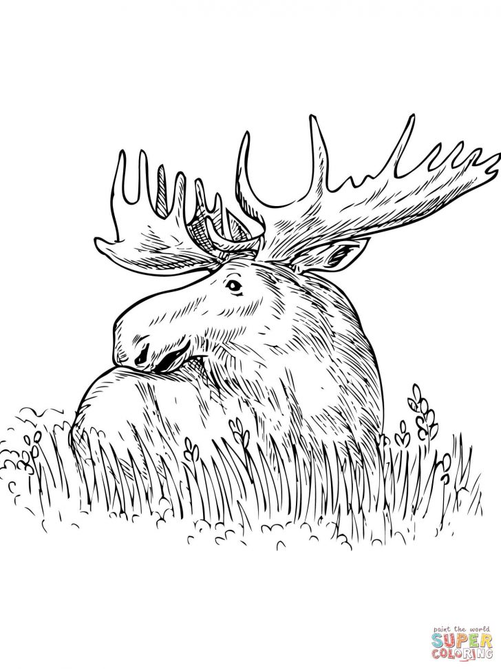 Grass Coloring Page Moose Sitting In A Grass Coloring Page Free Printable Coloring Pages