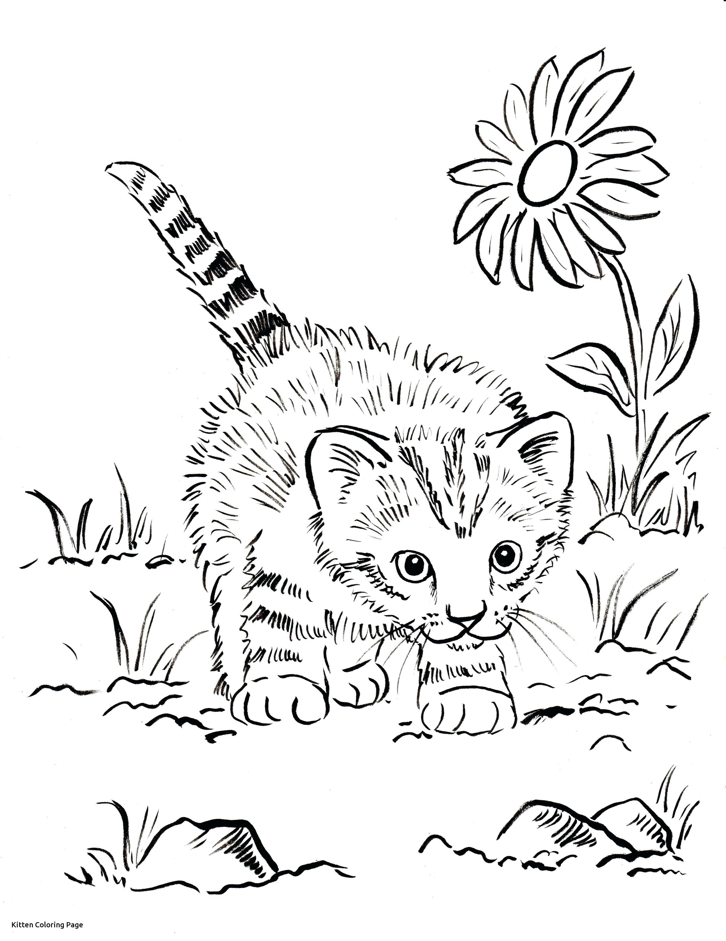 Kittens Coloring Pages Latest Coloring Pages Of Real Kittens 16 Best Printable Kitten