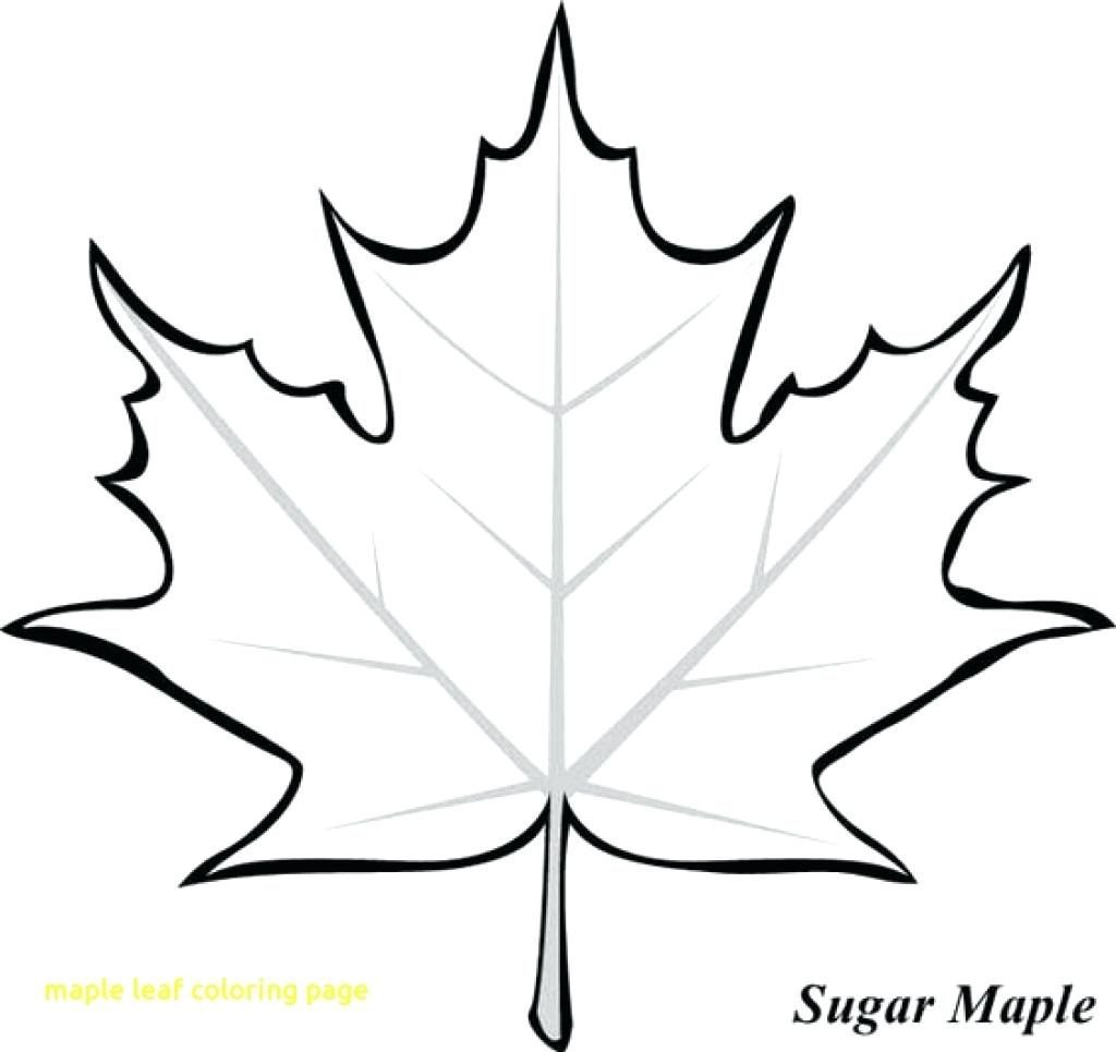 Leaf Coloring Page Maple Leaf Coloring Pageee Printable Leaves Colouring Pages Toronto