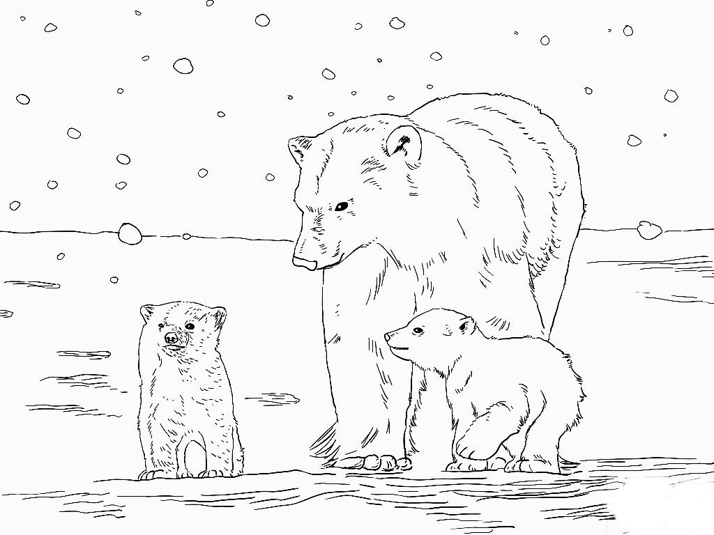 Polar Bear Coloring Pages Ba Polar Bear Coloring Sheet Luxury Polar Express Coloring Pages