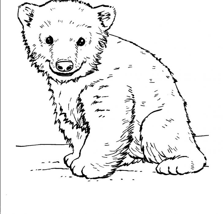 Polar Bear Coloring Pages Exceptional Polar Bear Coloring Pages Free Bears With Bertmilne Me