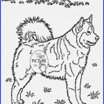 Puppy Dog Coloring Pages Arts Puppy Coloring Pages Smart Husky Puppies Coloring Pages