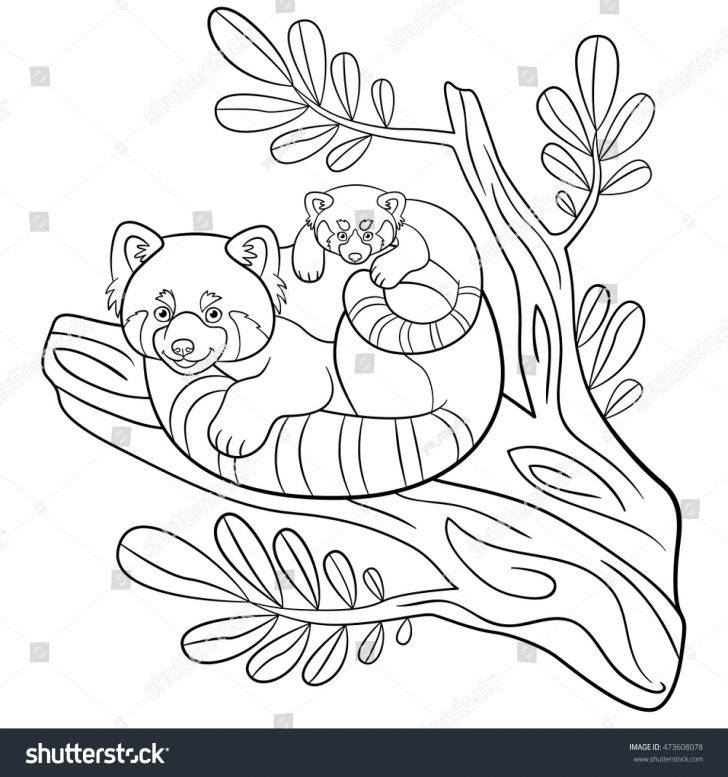 Red Panda Coloring Page Best Solutions Of Coloring Pages Mother Red Panda Sits Stock Vector