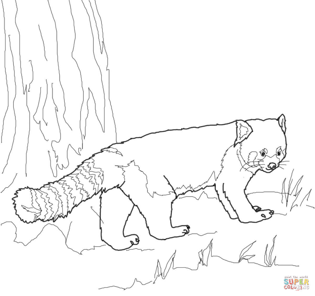 Red Panda Coloring Page Red Panda Coloring Page Free Printable Coloring Pages