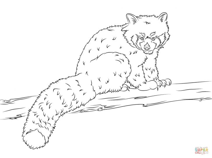 Red Panda Coloring Page Red Panda Coloring Pages Free Coloring Pages
