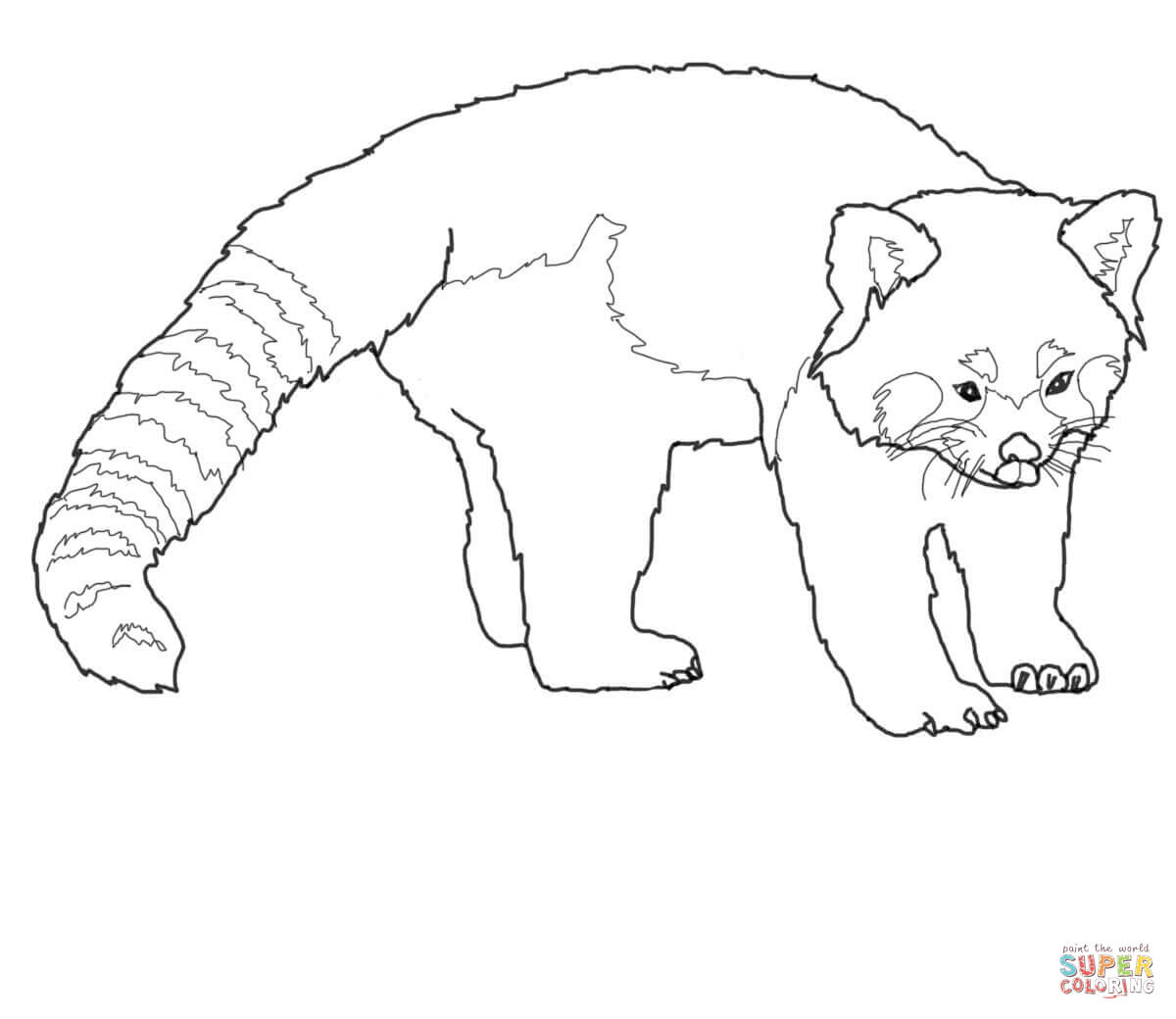 Exclusive Picture of Red Panda Coloring Page