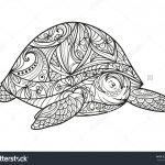 Turtle Coloring Pages Adult Coloring Pages Turtle Coloring Pages