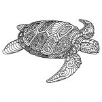 Turtle Coloring Pages Turtles Coloring Pages For Adults