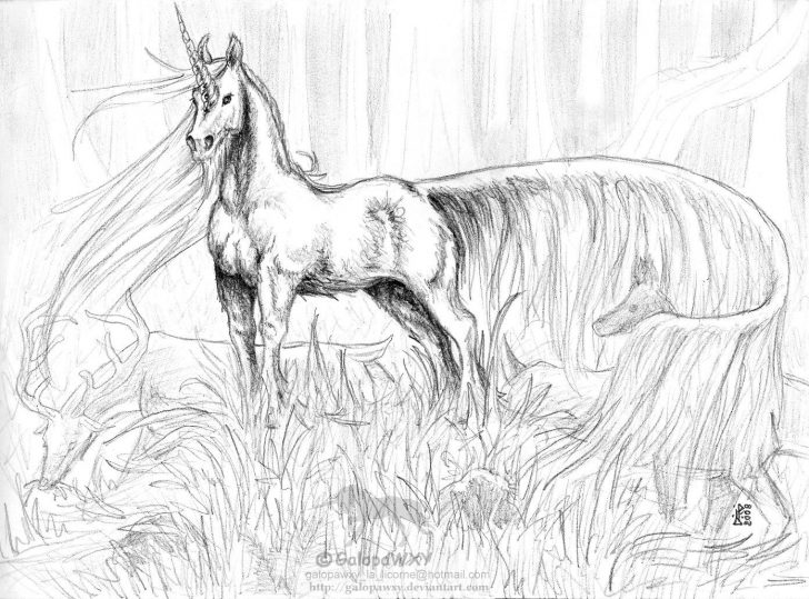 Unicorn Coloring Pages For Adults Best Of Unicorn Coloring Pages Adult Coloring Pages Free Coloring Book
