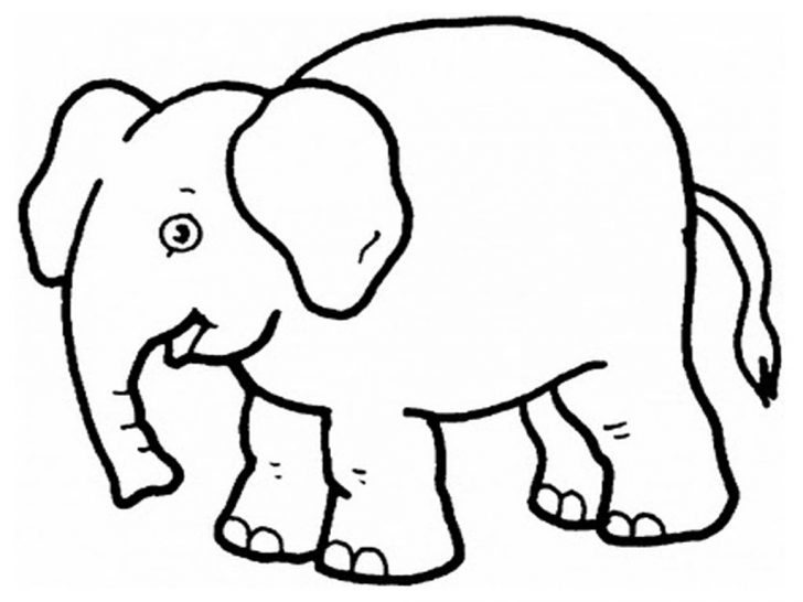 Zoo Animals Coloring Pages Zoo Animals Coloring Pages Elephant Preschool Coloring Pages Zoo