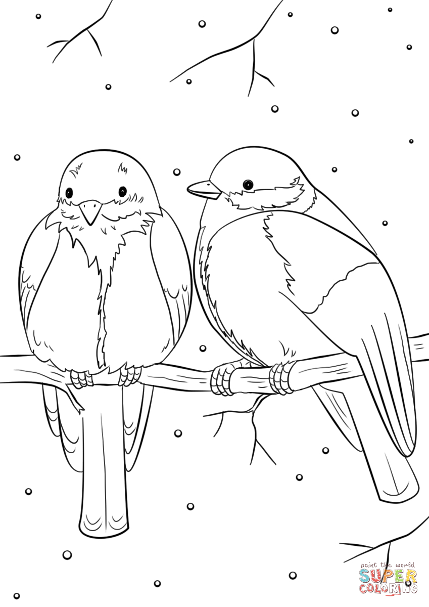 Bird Coloring Pages Winter Birds