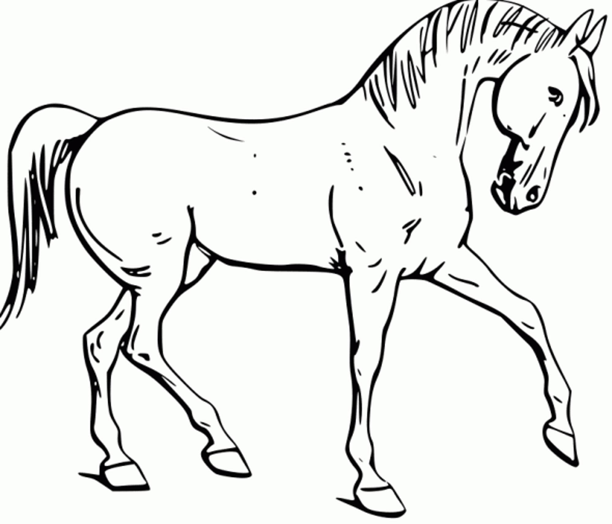 Horse Coloring Page Coloring Page