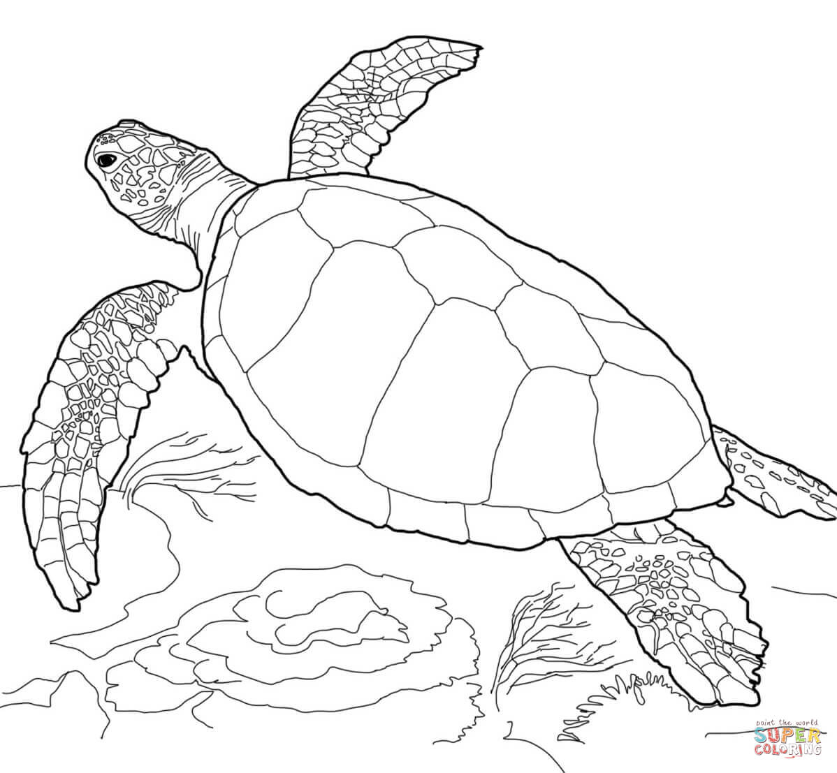 Turtle Coloring Pages Turtles Coloring